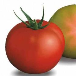 Pomidor Meryva F1 - 250 nasion