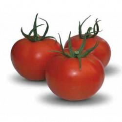 Pomidor Duratom F1- 250 nasion