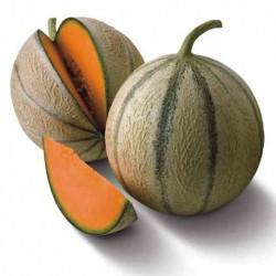 Melon Katrina F1 - 250 nasion
