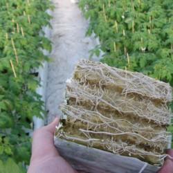 FRUIT NATURALG nawóz organiczny dolistny