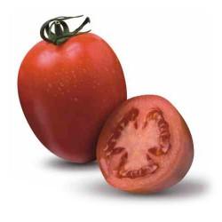 Pomidor Byelsa