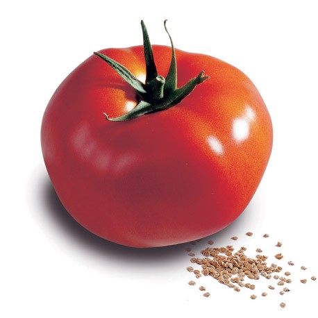 Pomidor Sarnia F1 - 500 nasion