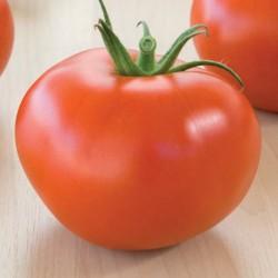 Pomidor Octydia F1 - 500 nasion