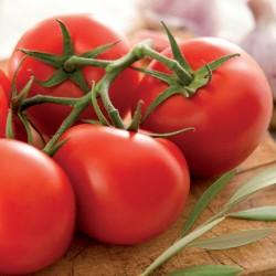 Pomidor Kalixo F1** - 100 nasion