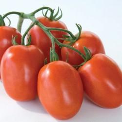 Pomidor Cyclade F1 - 100 nasion