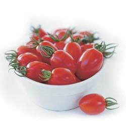 Pomidor Capriccio F1 - 100 nasion