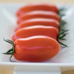 Pomidor Delicassi F1 - 100 nasion