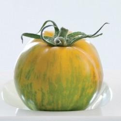 Pomidor Timenta HF1 - 100 nasion