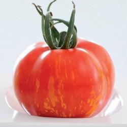 Pomidor Tirouge HF1 - 100 nasion