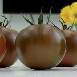 Pomidor Kakao F1 - 100 nasion