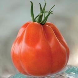 Pomidor Borsalina F1 - 100 nasion